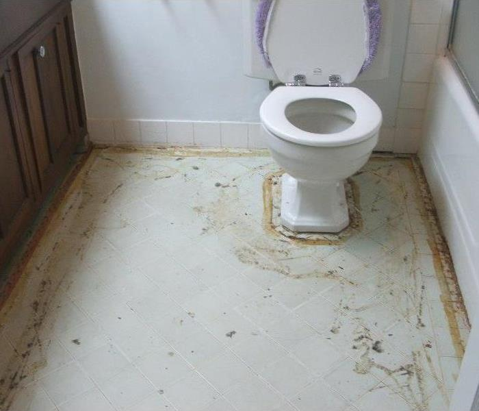 Water Damage My Toilet overflowed! Now what?