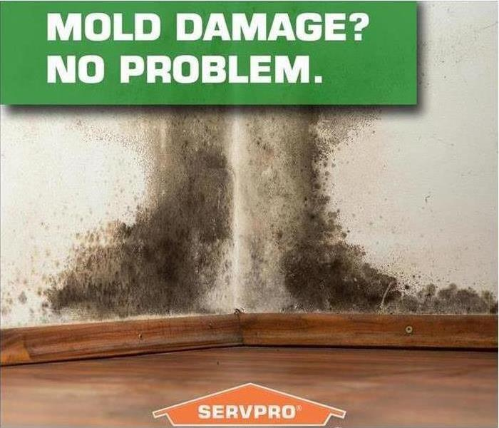 Mold Remediation Mold and the Structure of your Home